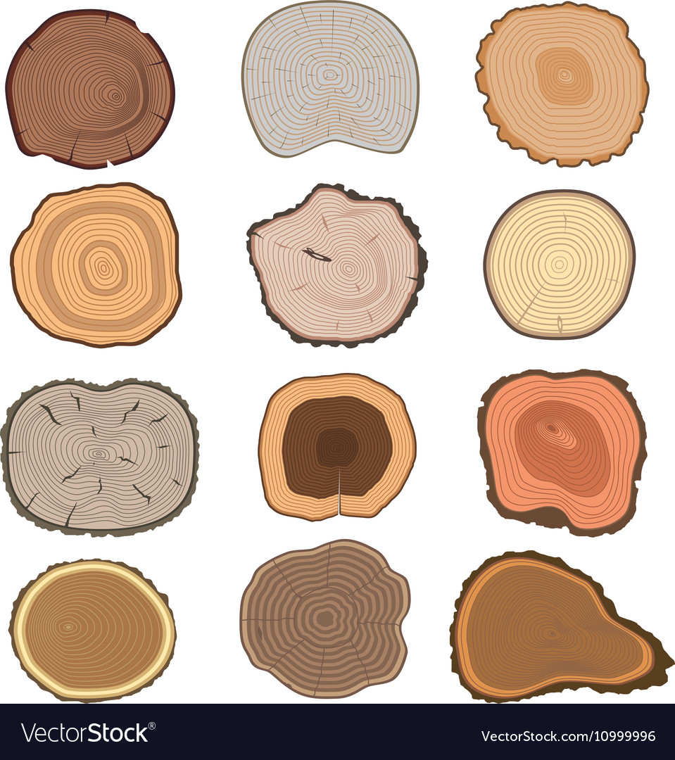 Tree slices set vector