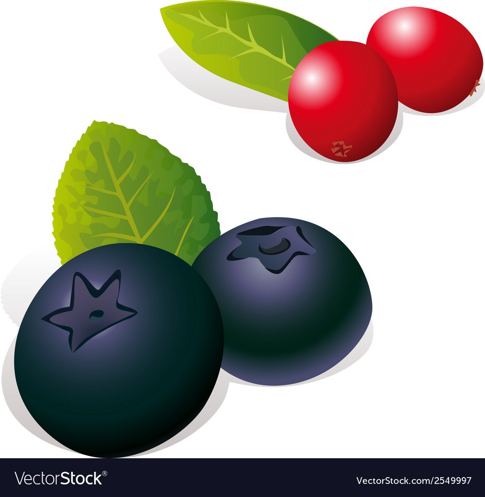Blueberry and cranberry vector