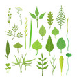 fresh green leaves from trees shrubs and grass vector image