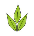 olive branch isolated icon vector image