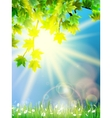 Eco background - green leaves grass bright sun vector image