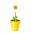 chamomile in pot vector image vector image
