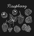 raspberries graphic sketch vector image