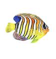 Watercolor tropic striped fish vector image