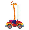 Giraffe on car meter wall or height chart vector image