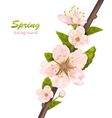 Spring Background with Cherry Blossom vector image