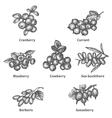 Sketch doodle hand-drawn set berries vector image