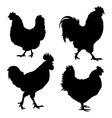 Chicken Silhouette vector image