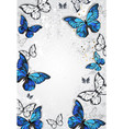 frame with butterflies morpho vector image