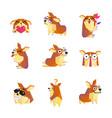 corgi dog cartoon character icons collection vector image