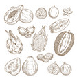 exotic tropical fruit isolated sketch set vector image vector image