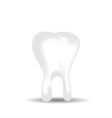 tooth on white background vector image