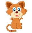 Baby cat cartoon vector image
