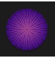 Purple flower on black background vector image