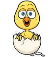 Little chicken vector image