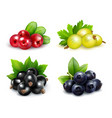 berry clusters realistic set vector image
