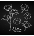 Hand drawn decorative cotton flowers vector image
