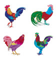 four roosters series vector image