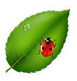 ladybird on leaf vector image