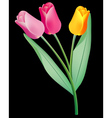 tulips background vector image vector image