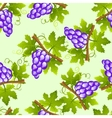 grape seamless pattern vector image vector image