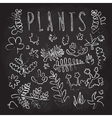 Hand drawn doodle plants isolated objects vector image