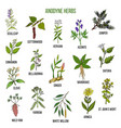 anodyne herbs hand drawn set of medicinal plants vector image