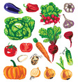 colored vegetables on white background vector image