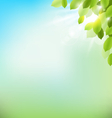 Tree foliage with sunlight on sky Floral nature vector image