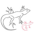 lizard vector image