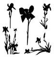 iris silhouettes series vector image
