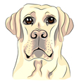 serious dog breed vector image vector image