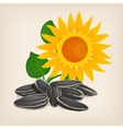 Yellow sunflowers and sunflower seeds vector image