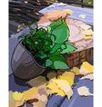 herbarium autumn vector image