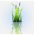 reflection eco background vector image