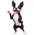 Boston Terrier standing vector image vector image