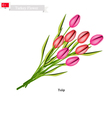 Tulip Flowers The National Flower of Turkey vector image