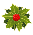 christmas holly leafs with berries vector image
