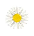 Camomile flower isolated on white background vector image