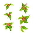Mistletoe Christmas plants set with leaves and vector image