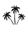 Three palms sketch vector image