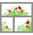 Set summer flower poppy daisy isolated on white vector image