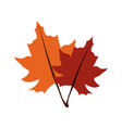 fall leaves icon image vector image