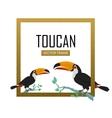 Toucan Bird Flat Design vector image