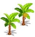 Two palm trees with hanging bananas and without vector image