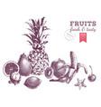 hand drawn juicy fruits monochrome border vector image vector image