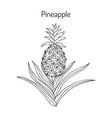 pineapple ananas comosus tropical plant vector image
