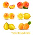 Big Group Of Yellow And Orange Fruits vector image vector image