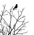 Songbird vector image