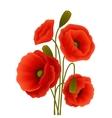 Poppy flower poster vector image